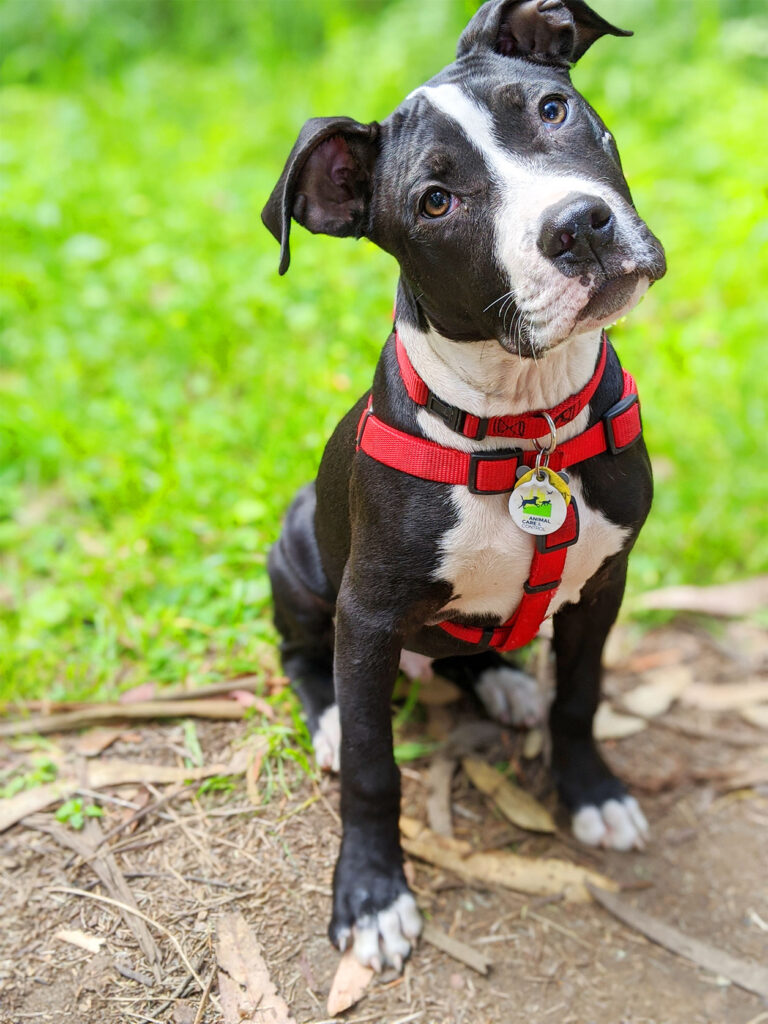 curious-doggo